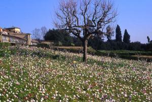 fiori Petraia