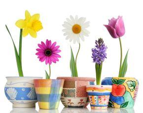 vasi-di-fiori_NG2