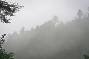 mistywoodsbackground-s